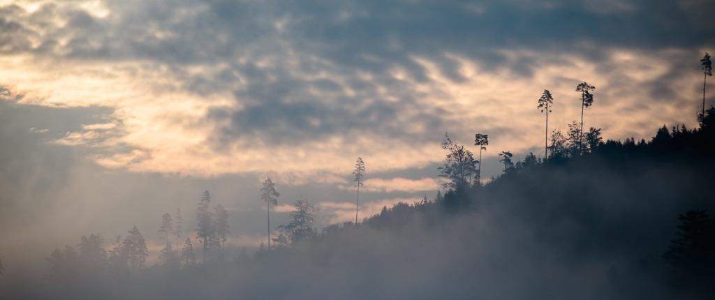 Black Forest Adventures Summer Film Fog