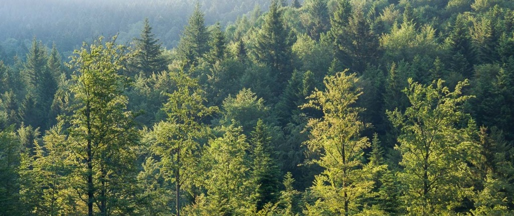 Black Forest Adventures Summer Film Wood